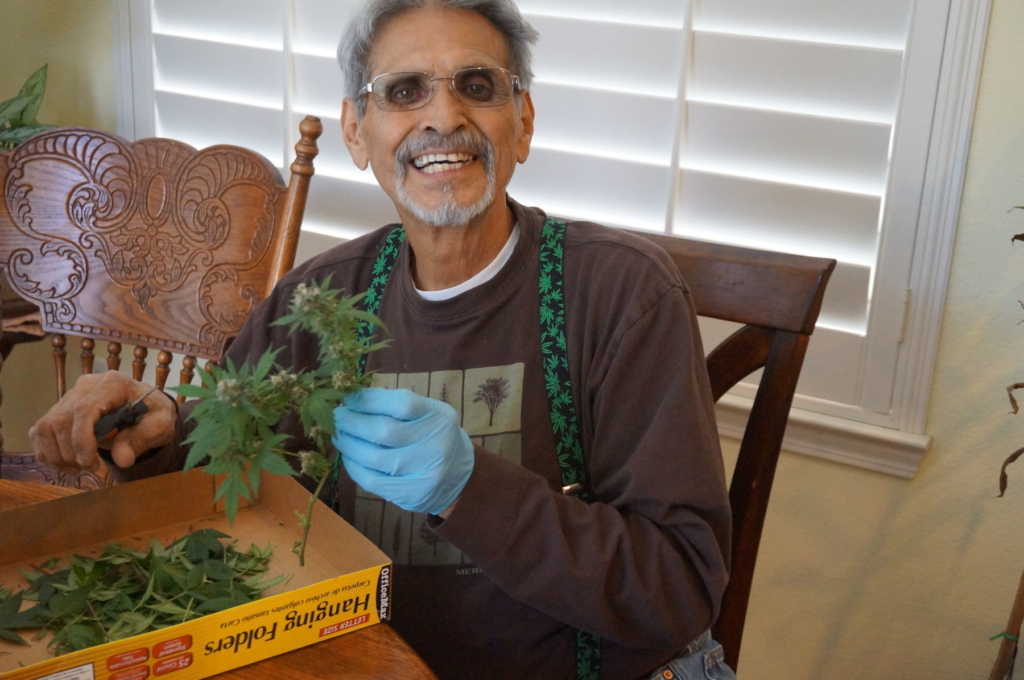 Charles Richard Gallegos trimming homegrown marijuana for cancer